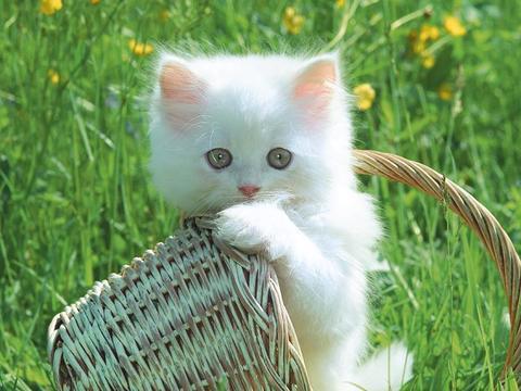 Unduh 93+  Gambar Kucing Yang Sangat Imut Imut Gratis