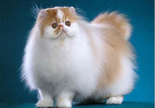 Kucing Paling Comel Di Dunia